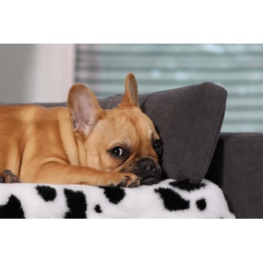 Dog beds & accessories